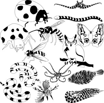 Artist clipart mimicry. Animal by studio devanna