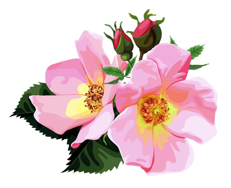 Artist clipart transparent.  best flowers png