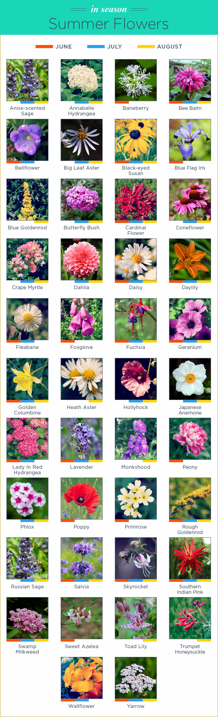 What flowers are in. August clipart august flower