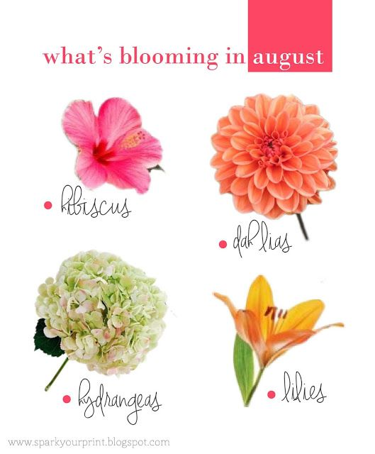 Flowers i mariana hodges. August clipart august flower