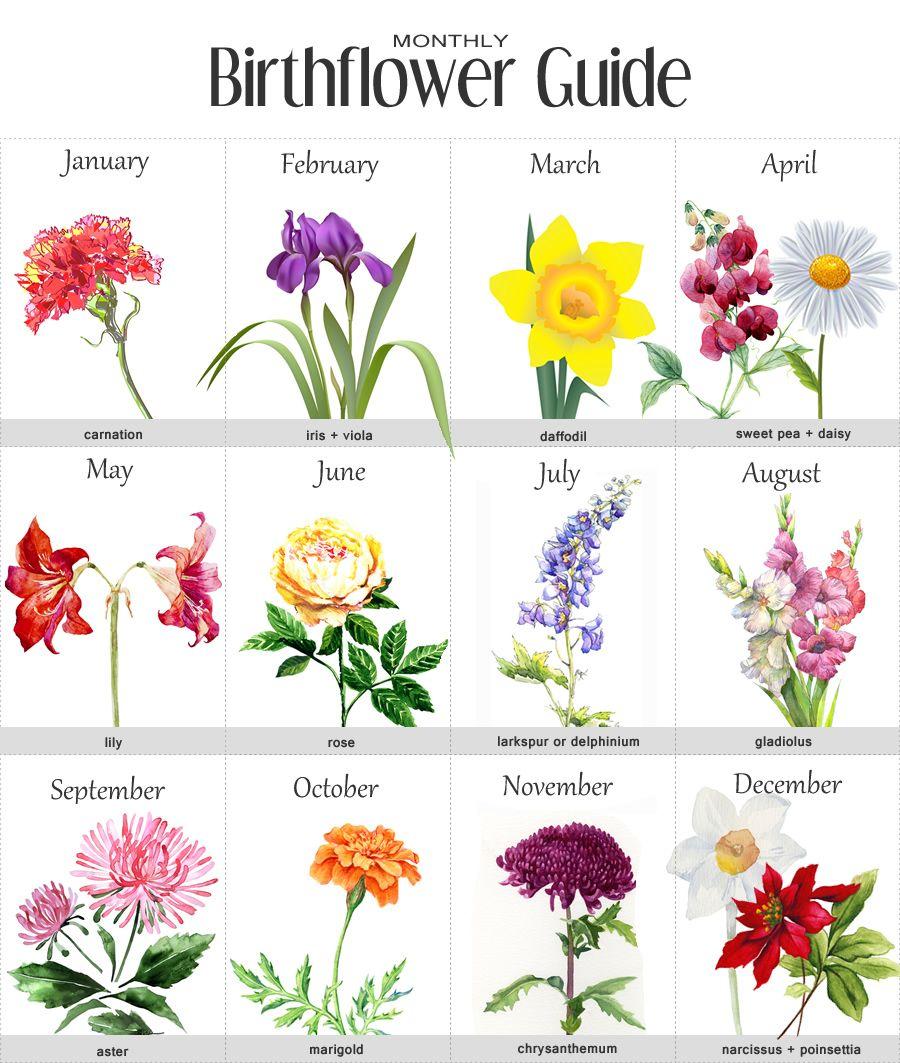 August clipart august flower. Birth month flowers body