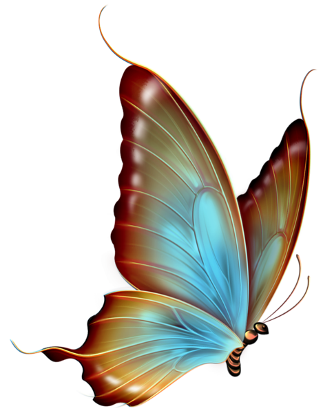 Brown and blue transparent. Clipart butterfly translucent