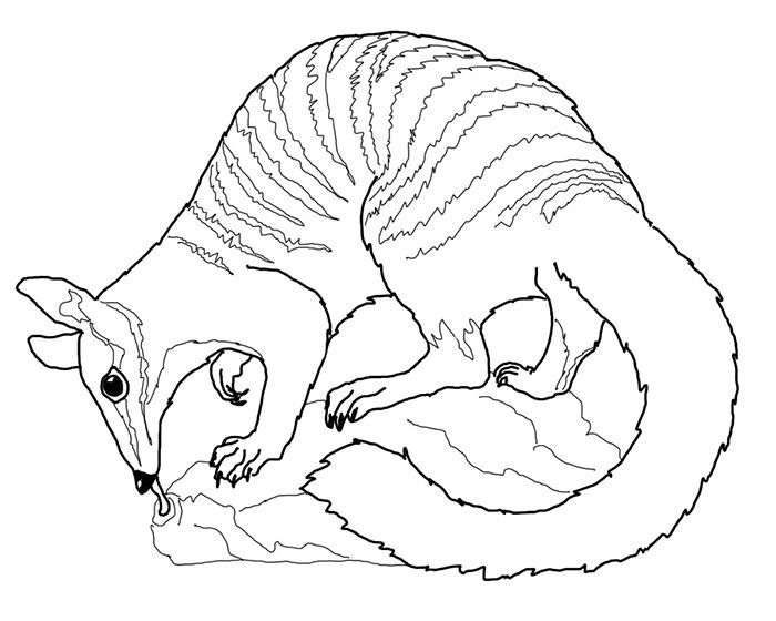 Australia clipart drawing. Australian animals at getdrawings