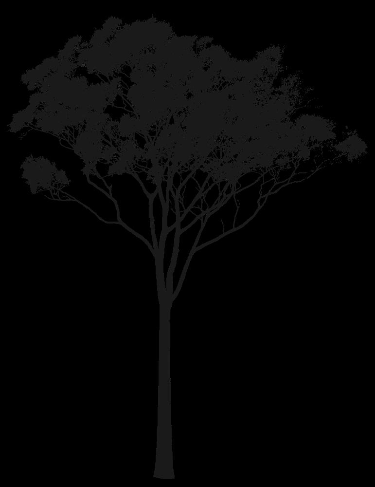 Australia clipart silhouette. Eucalyptus or gum tree