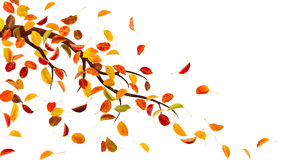 Autumn clipart branch.  collection of fall