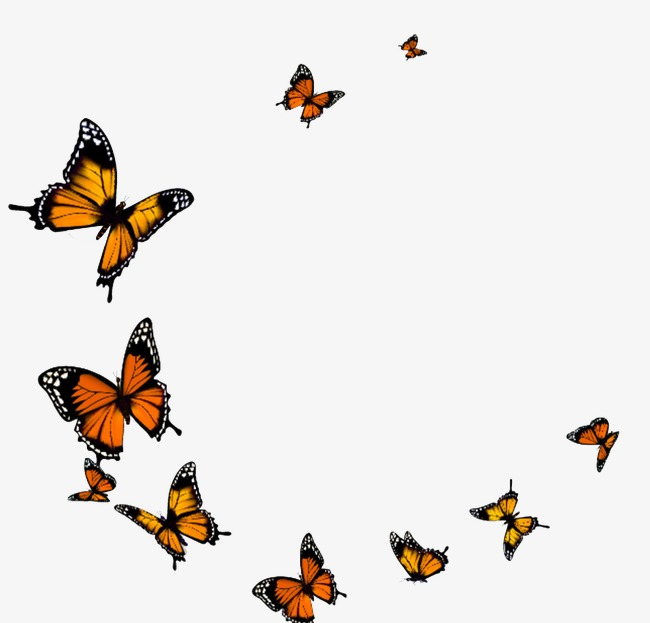 Fly yellow frame png. Autumn clipart butterfly
