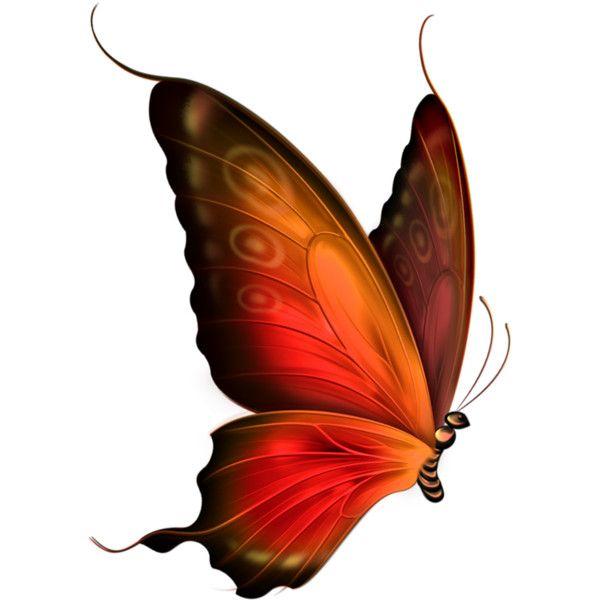 Autumn clipart butterfly.  best butterflies images