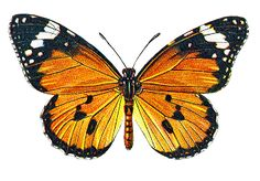Autumn clipart butterfly. Clip art pinterest catnipstudiocollage