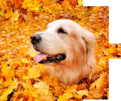 Autumn clipart dog. By lenkinrom on deviantart