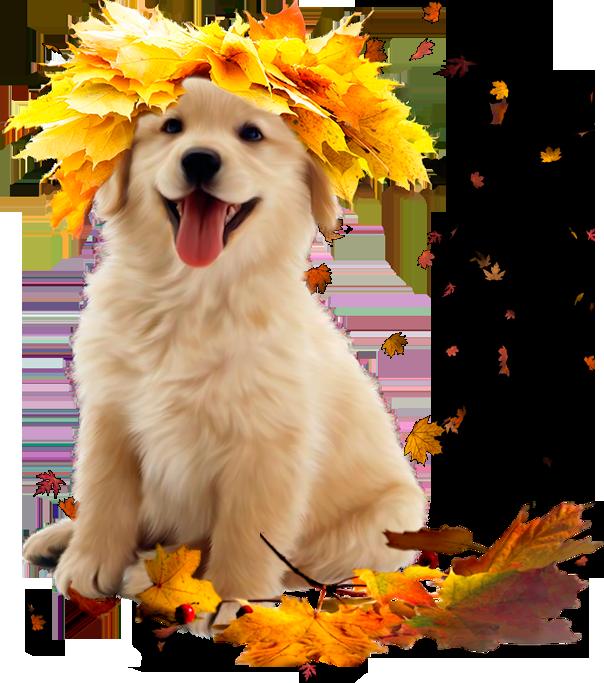 Dog clipart autumn. By lenkinrom on deviantart
