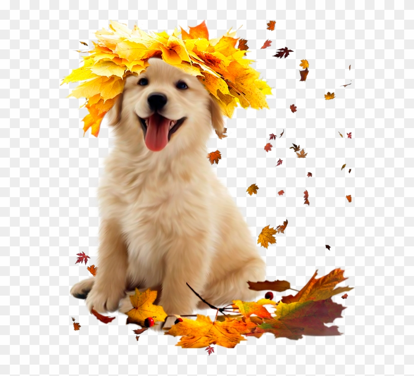 Clipart dogs autumn. Dog golden retriever puppy