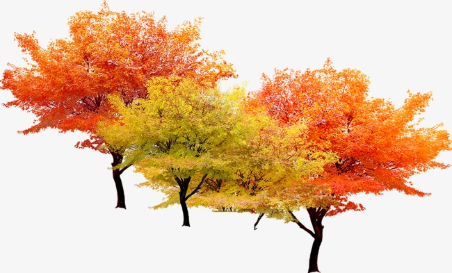Autumn clipart tree. Fall trees png image