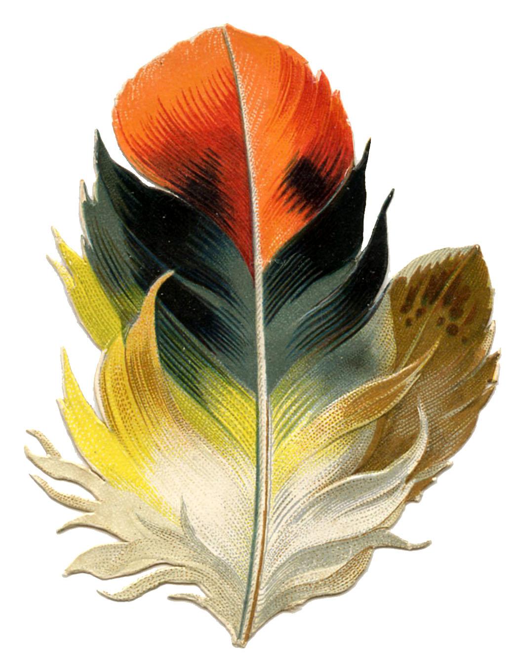 Antique clip art fabulous. Feather clipart victorian