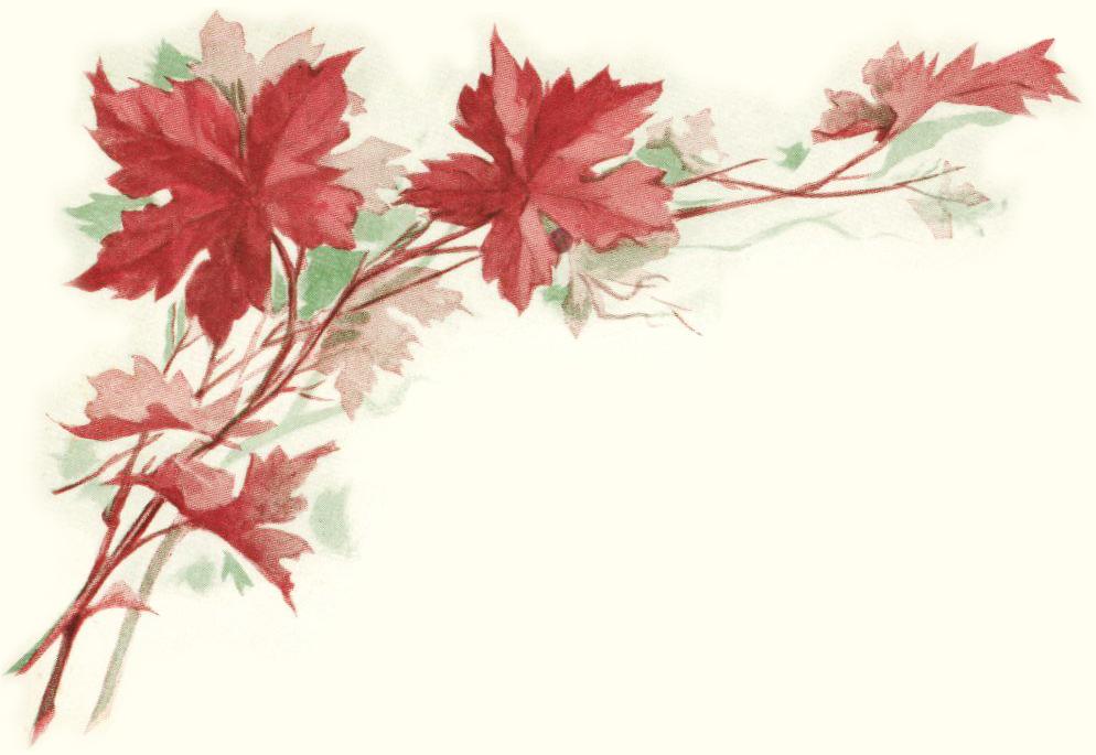 Leaf illustration . Autumn clipart victorian