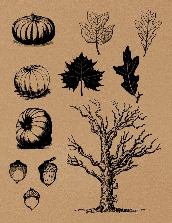 Autumn clipart vintage. Fall rustic antique pumpkin