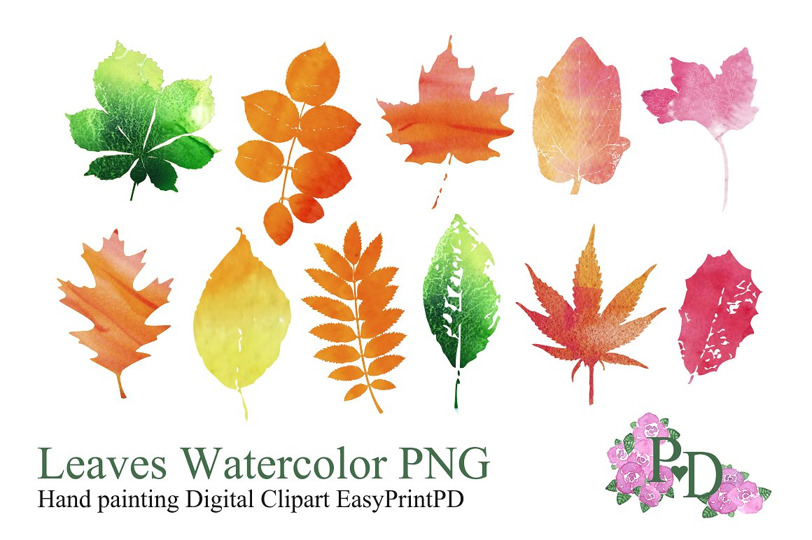 Autumn clipart watercolor. Leaves objects creative market