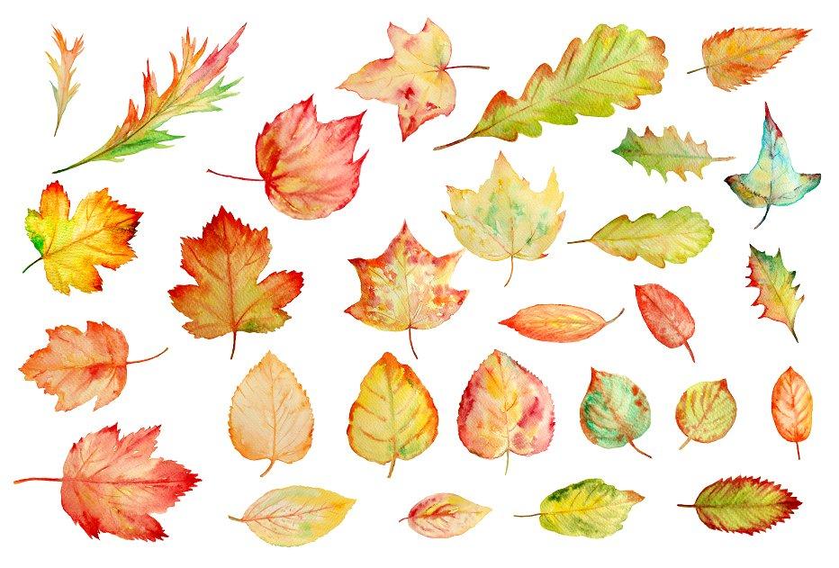 Autumn clipart watercolor. Leaves illustrations creative market