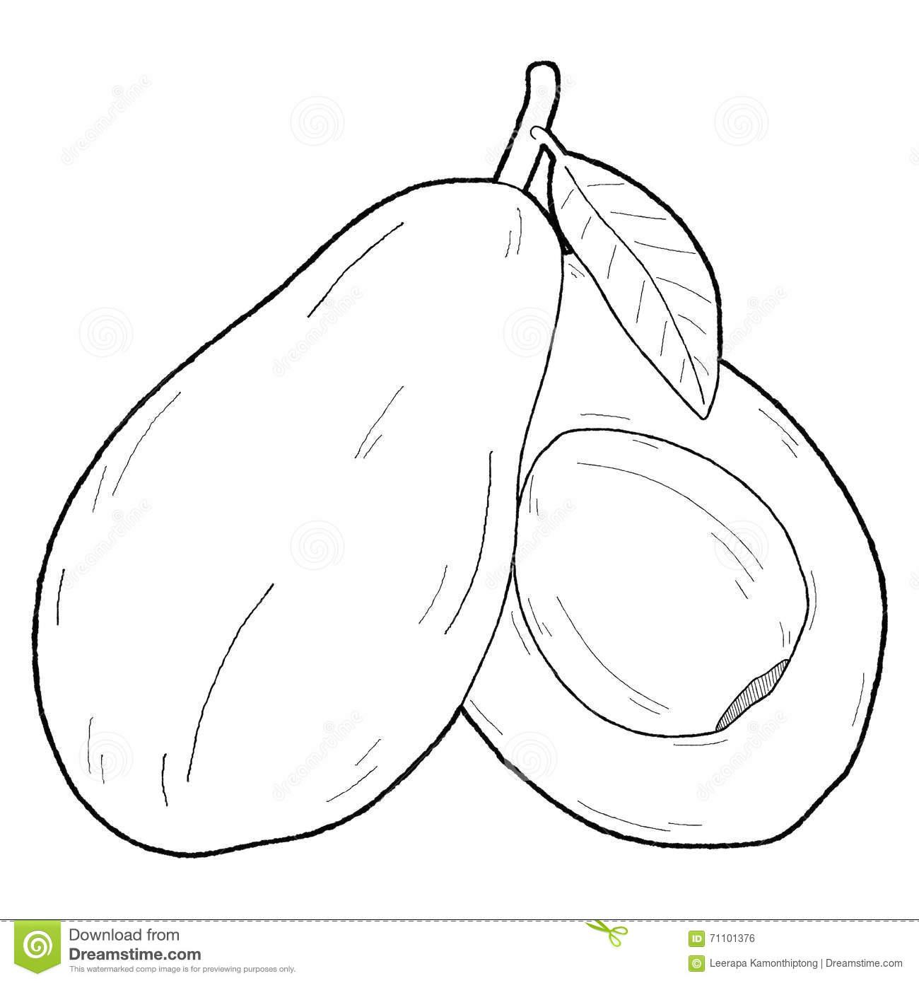 Half . Avocado clipart abocado