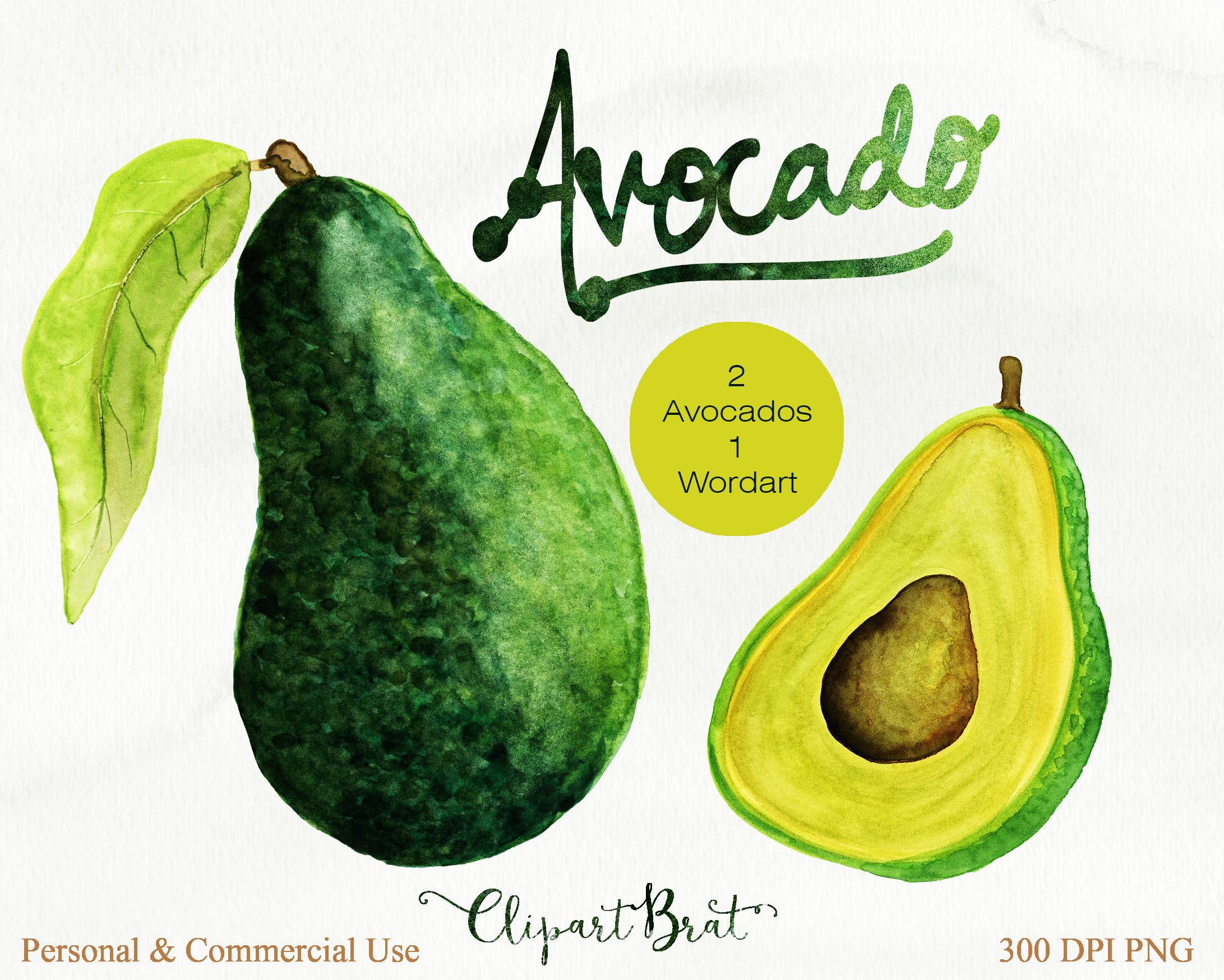Watercolor avacado vege design. Avocado clipart advocado
