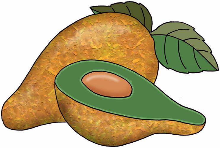 Avocado clipart atis. Cliparthot of abokado and