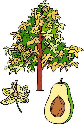 Clip art flowers and. Avocado clipart avocado tree