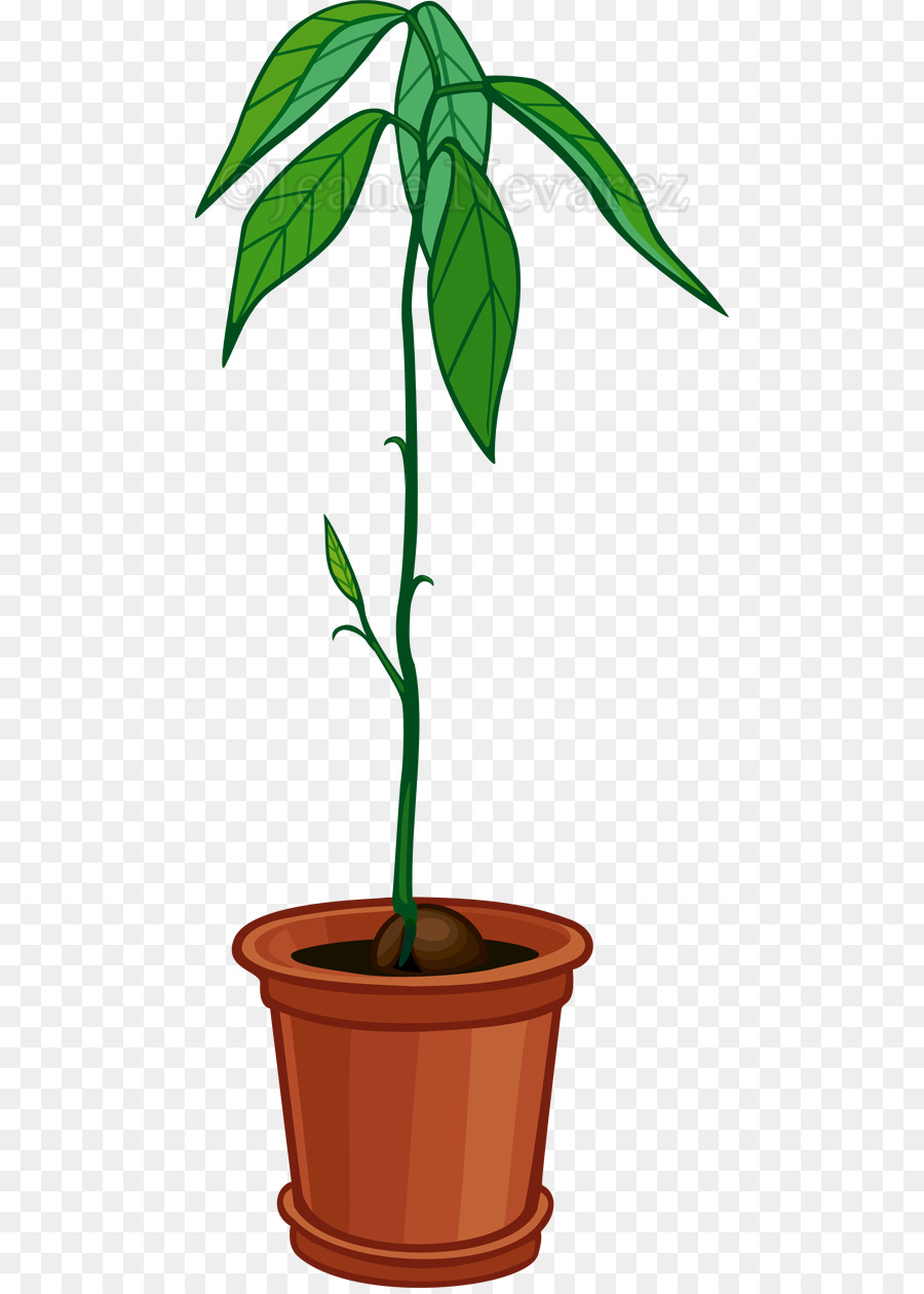 Avocado clipart avocado tree. Plants background