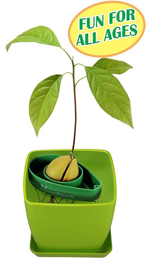 Amazon com avoseedo bowl. Avocado clipart avocado tree