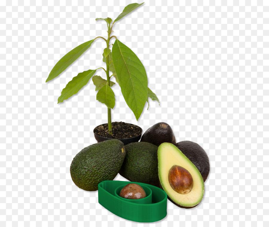 Avocado clipart avocado tree. Fruit transparent clip art