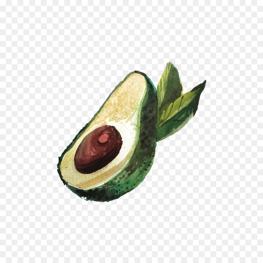 Cartoon drawing png download. Avocado clipart draw