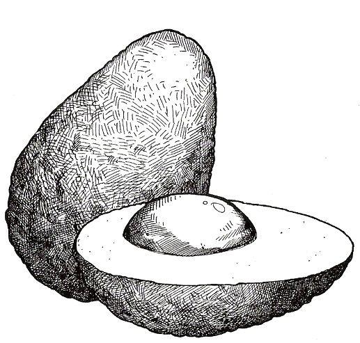 Avocado clipart line drawing. Colagem abacate educa o