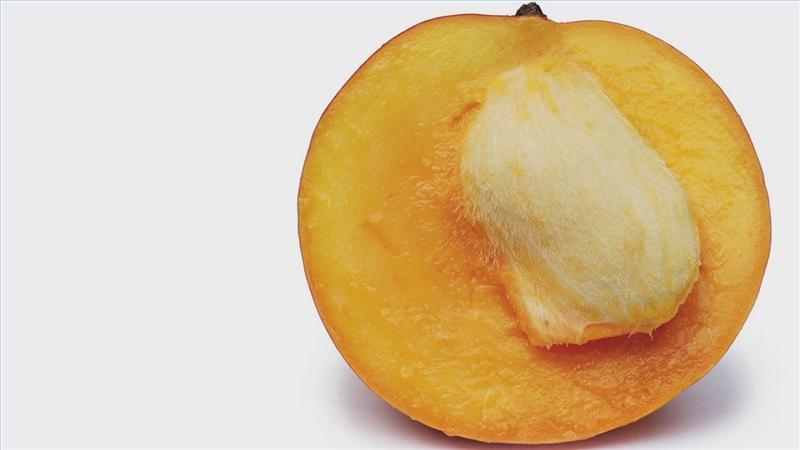 Avocado mango seed