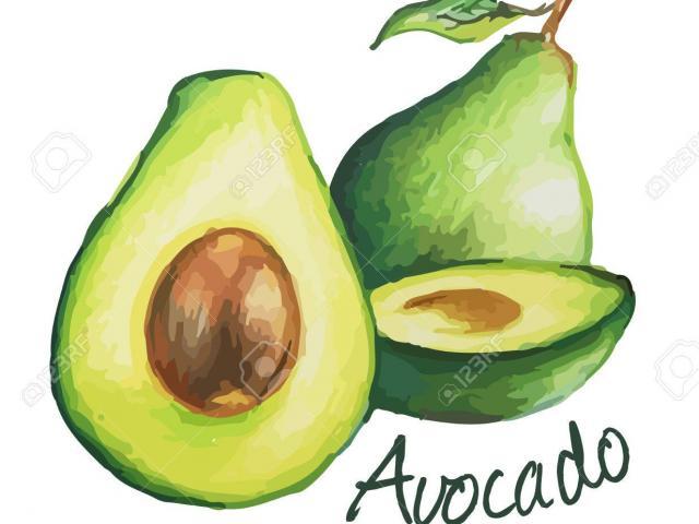 Avocado clipart printable. Free download clip art