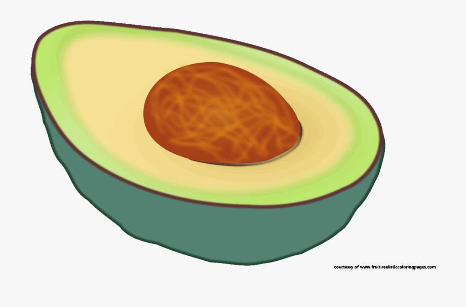 Single gambar buah alpukat. Avocado clipart vegetable