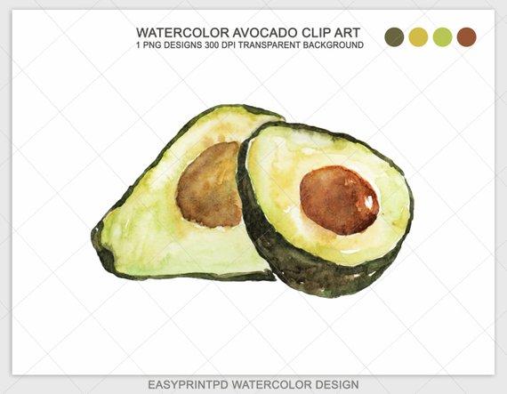 Clip art hand painted. Avocado clipart watercolor