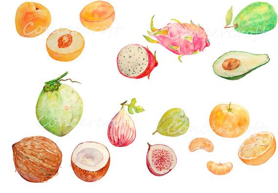 Avocado clipart watercolor. Fruit dragon coconut