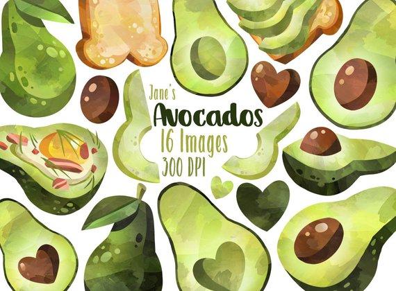 Avocado clipart watercolor. Avocados download instant