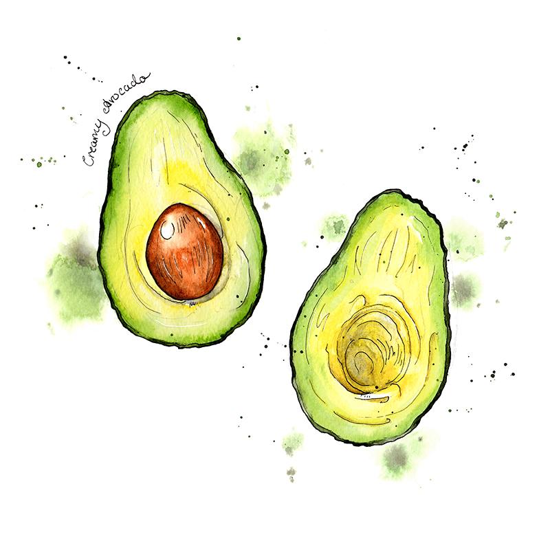 Avocado clipart watercolor. Amy holliday illustration i