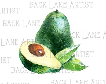 Avocado clipart watercolor. Etsy fruits drawing lineart