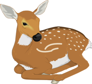 Baby . Babies clipart fawn