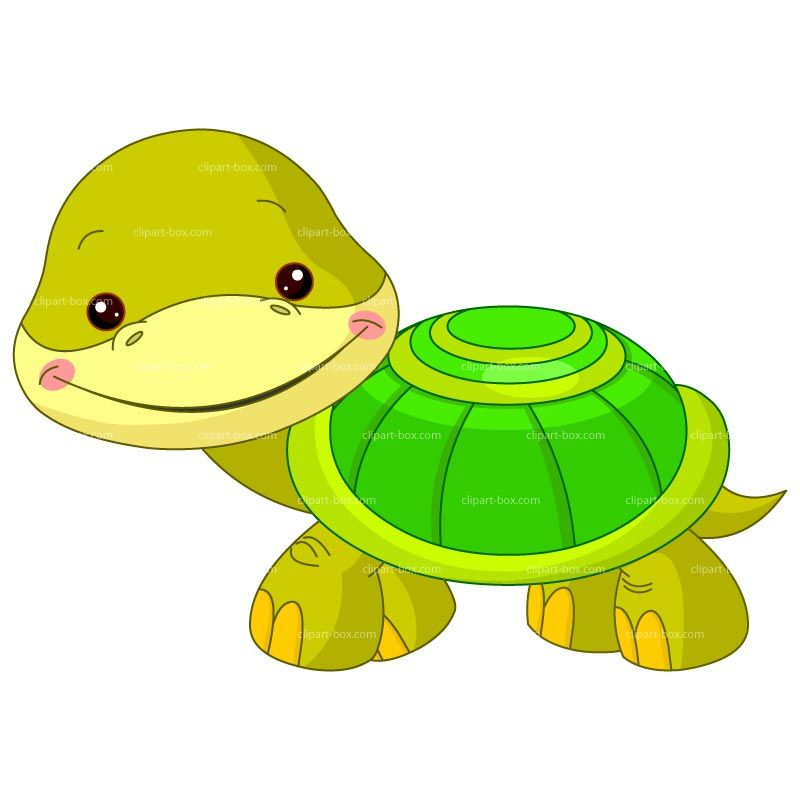 Clipart turtle baby turtle. Royalty free vector design