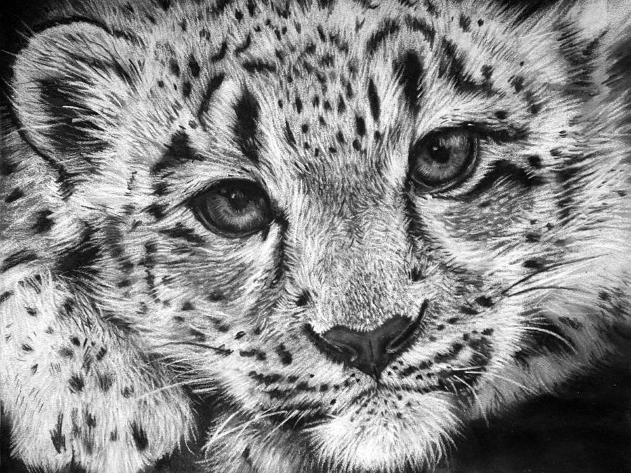 Baby clipart snow leopard. Drawing by sharlena wood