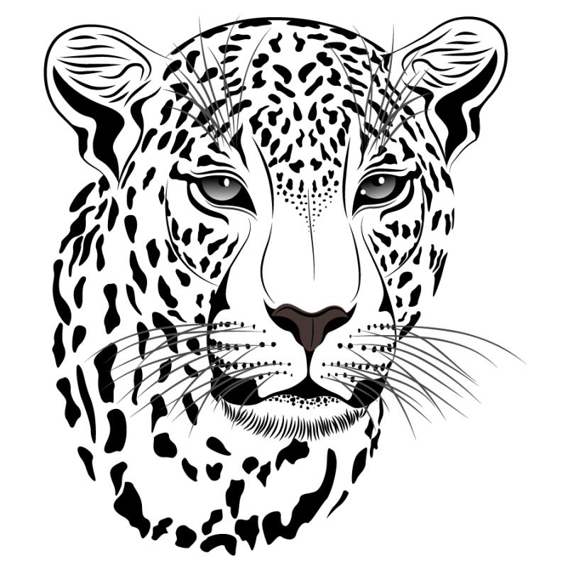 Drawing at getdrawings com. Baby clipart snow leopard