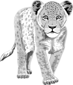 Baby clipart snow leopard. Clip art at clker