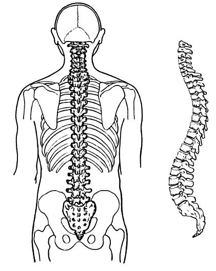 Back back bone