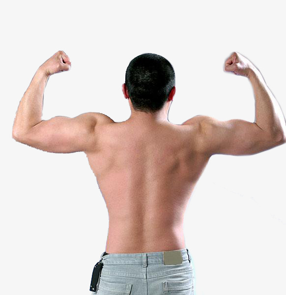 Back clipart body back. Upper exposed man muscle