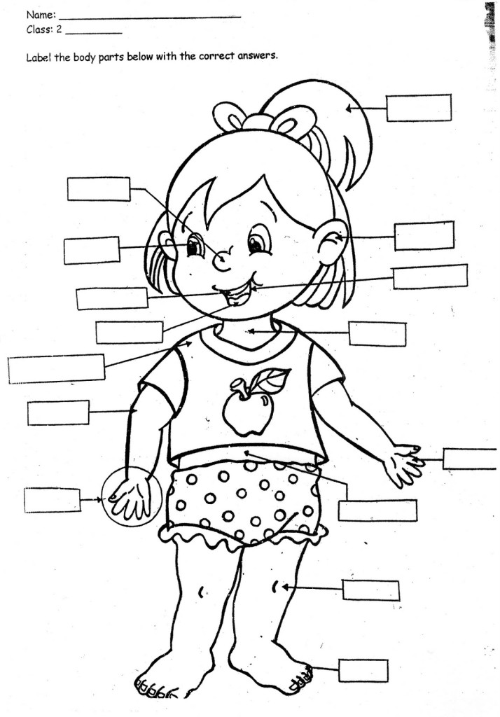 Back clipart body part. My parts coloring pages