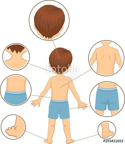 Kid boy parts illustration. Back clipart body part