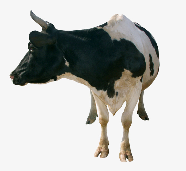 Back clipart cow. A big looking dairy