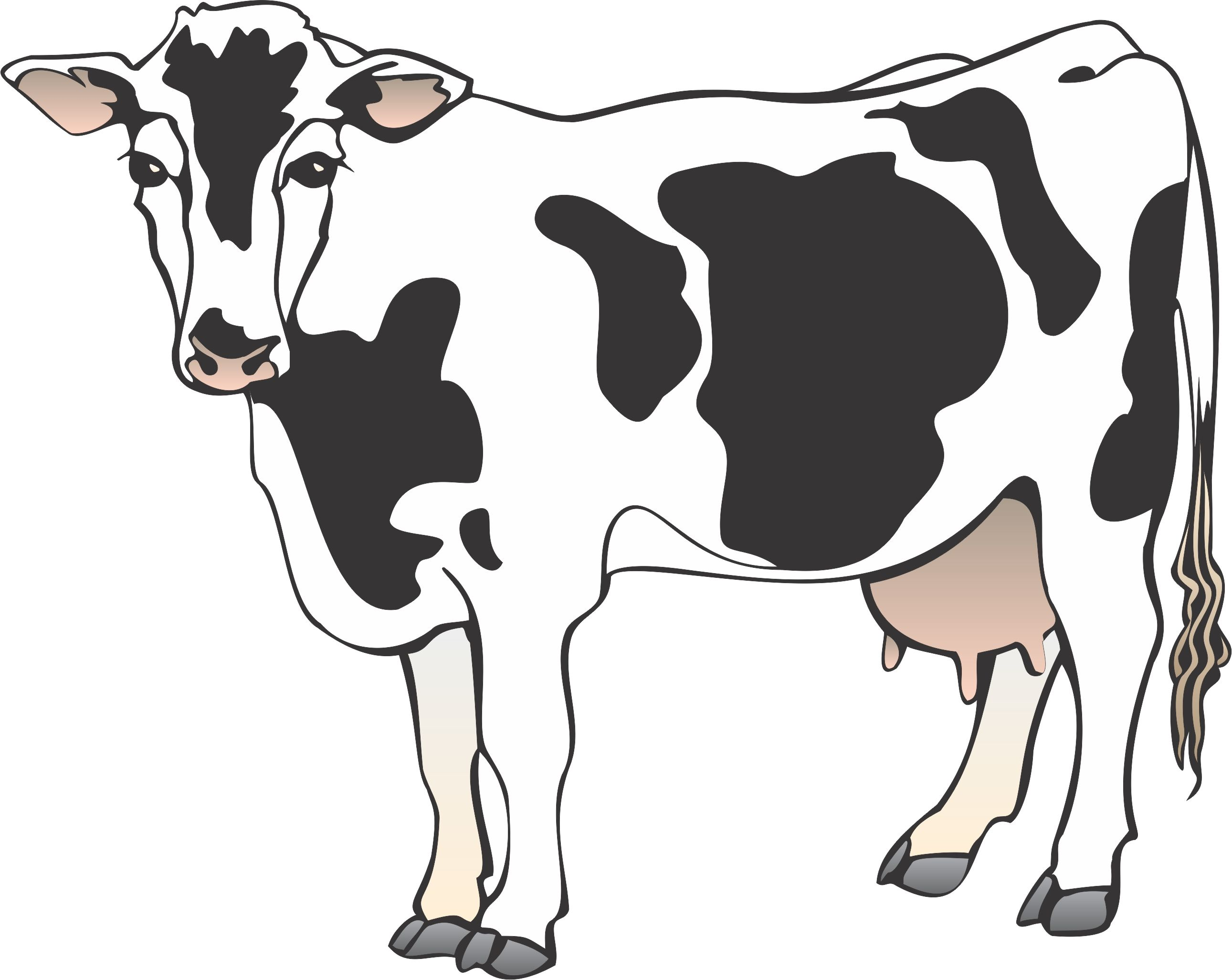 Back clipart cow. Cartoon cows pictures next
