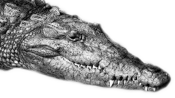 Back clipart crocodile. Free picture of